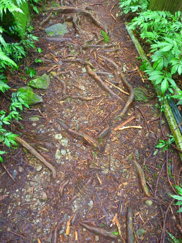 Petite randonnée au sud de Taufen, dans la région de Miaoli - P1330585.JPG