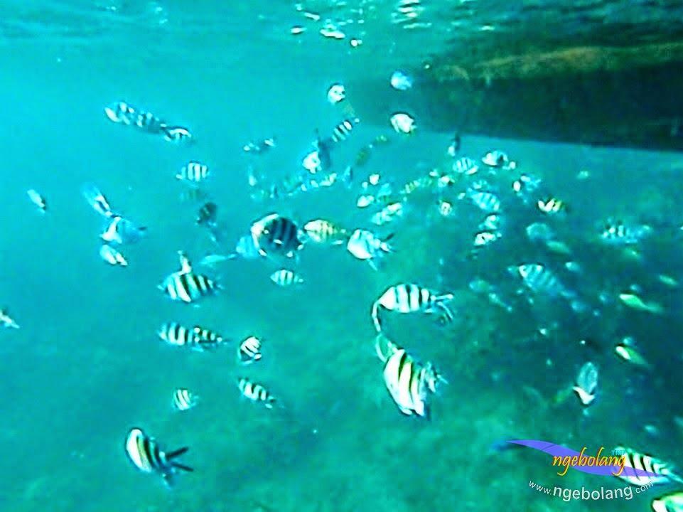 explore-pulau-pramuka-olp-15-16-06-2013-03