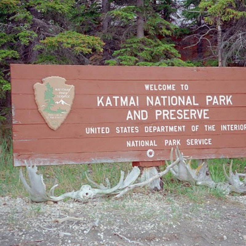 Katmai National Park & King Salmon, una delle zone del mondo piu' ricche di orsi bruni.