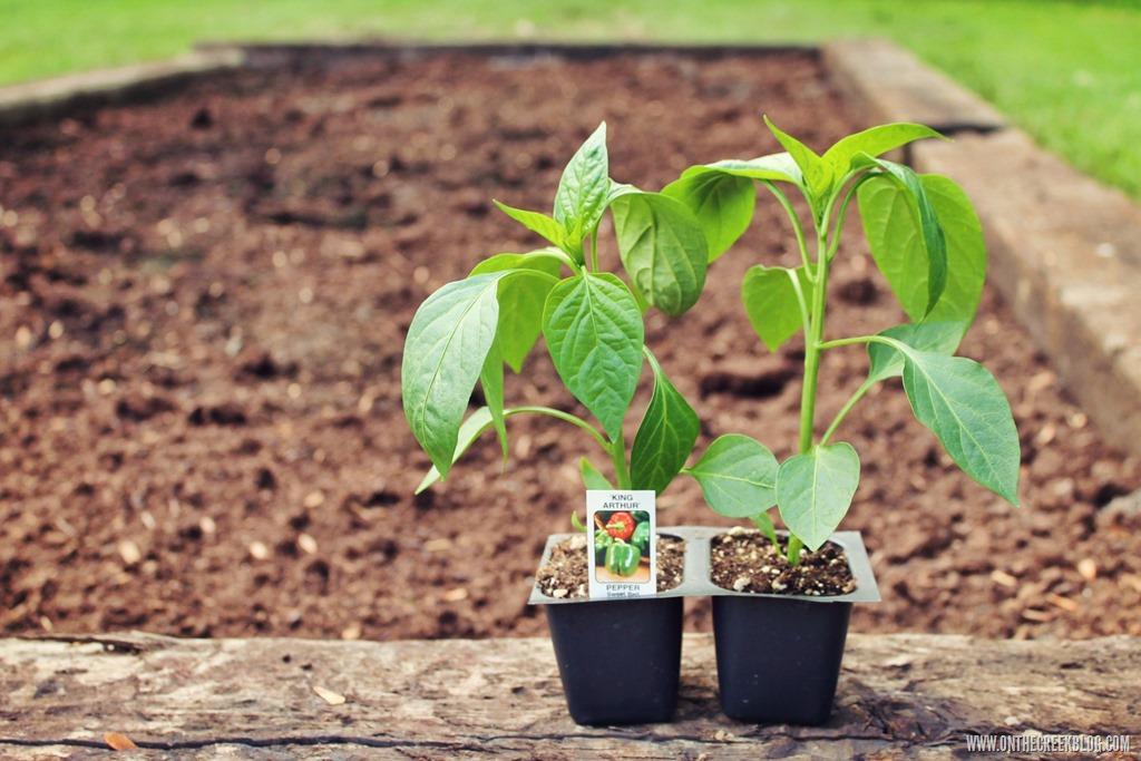 [plants5%5B10%5D]