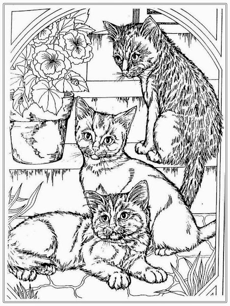 Cat Coloring Page For Adults  Cat Coloring Pages For Adult Realistic Coloring  Pages