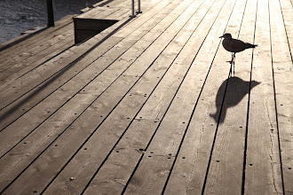 "Photo: ""A bird"" Aker Brygge in Oslo, Norway  ノルウェーのオスロ・フィヨルド沿い、アーケル・ブリッゲにて。"