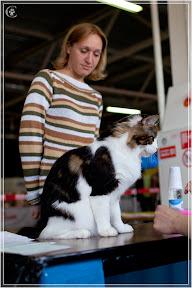 cats-show-24-03-2012-fife-spb-www.coonplanet.ru-029.jpg