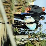 _DSC9901.thumb.jpg