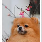 櫻花與福袋 - DSC_0106.jpg
