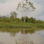 Reflejo de río