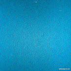 plankton-2.jpg