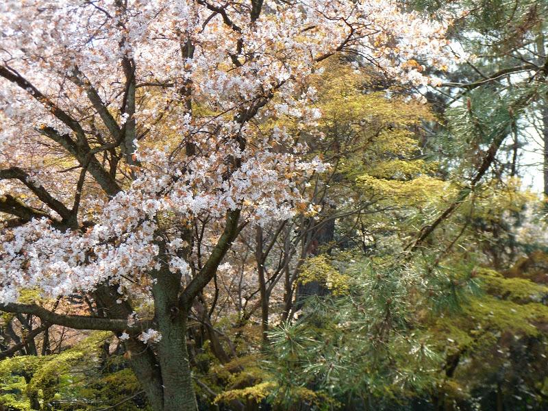 2014 Japan - Dag 10 - tom-SAM_0555-0003.JPG