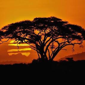 tramonto by Vito Masotino - Landscapes Sunsets & Sunrises ( trave, sunshine, tanzania, africa,  )