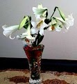 Oriental Lily Display In Vase
