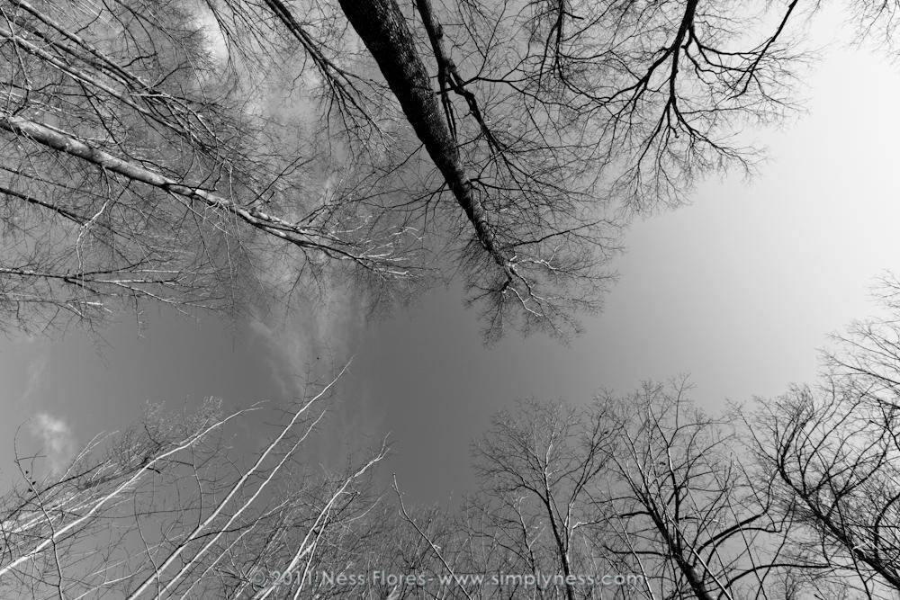 Winter Trees-7212