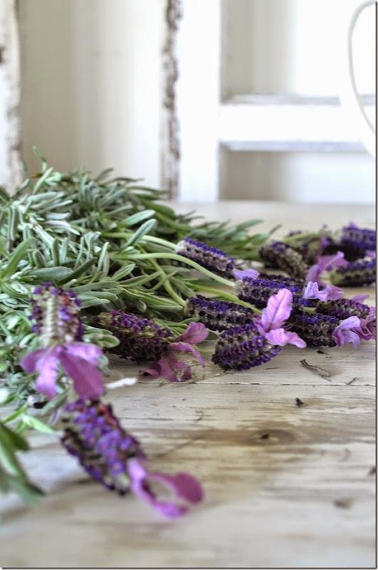 Fresh herbs 5