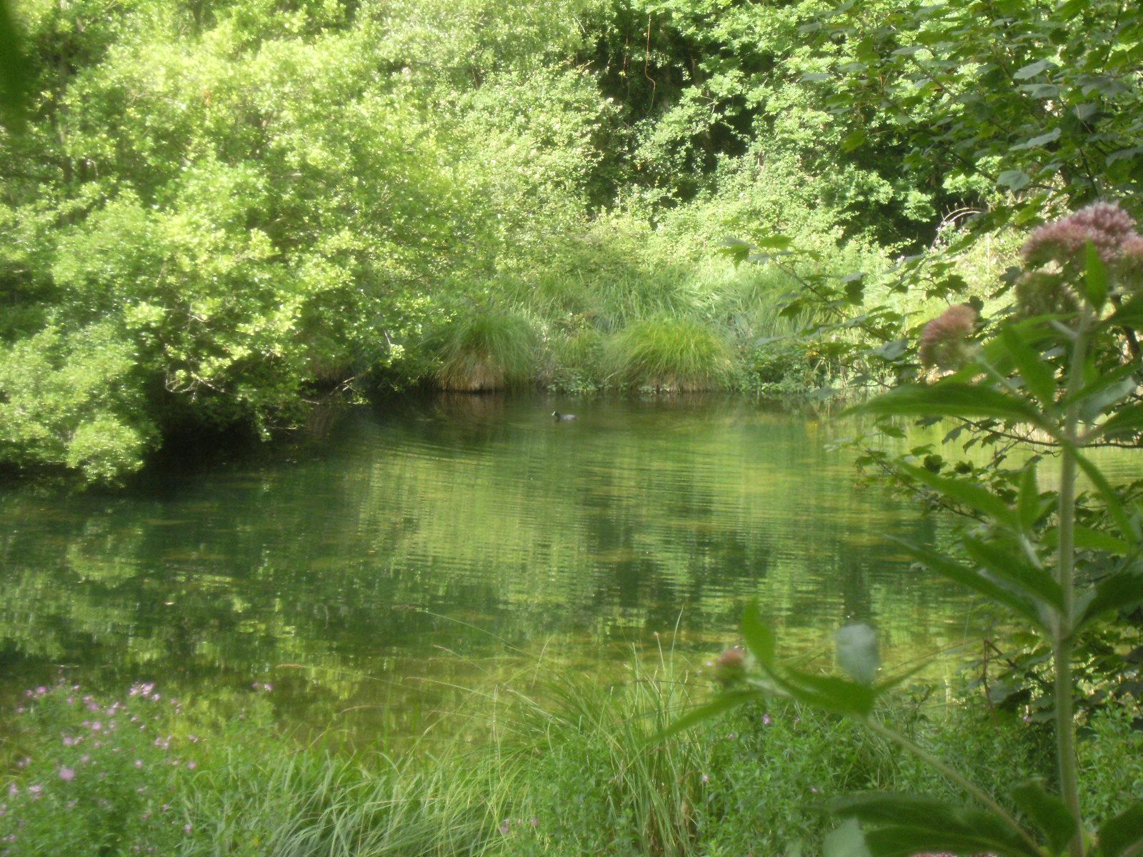 1007250102 Swanbourne Lake