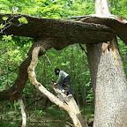 Белогорье - Заповедник лес на Ворскле 026.jpg