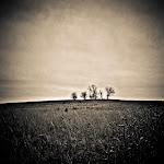 Prairie Trees, David McCleery, davidmccleery.cm.jpg