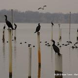 01-26-13 White Rock Lake - IMGP4304.JPG