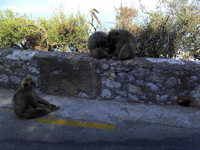 Sobreda - Cebolais - Algeciras - Gibraltar - Ronda - Malaga - Granada 2011-07-26%25252011.28.51