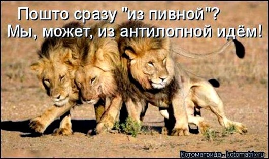 1481911517_kotomatrica-3