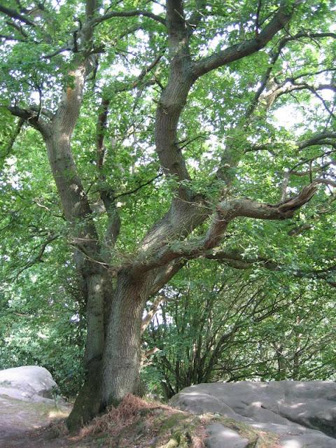 tree on stone arm rocks
