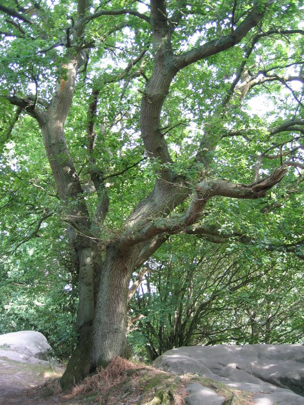 tree on stone arm rocks