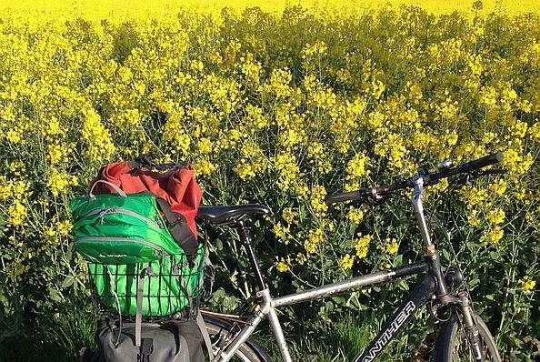 Deuter- und Ortlieb-Rucksack im Fahrradkorb an einem Rapsfeld bei Mainz-Bretzenheim