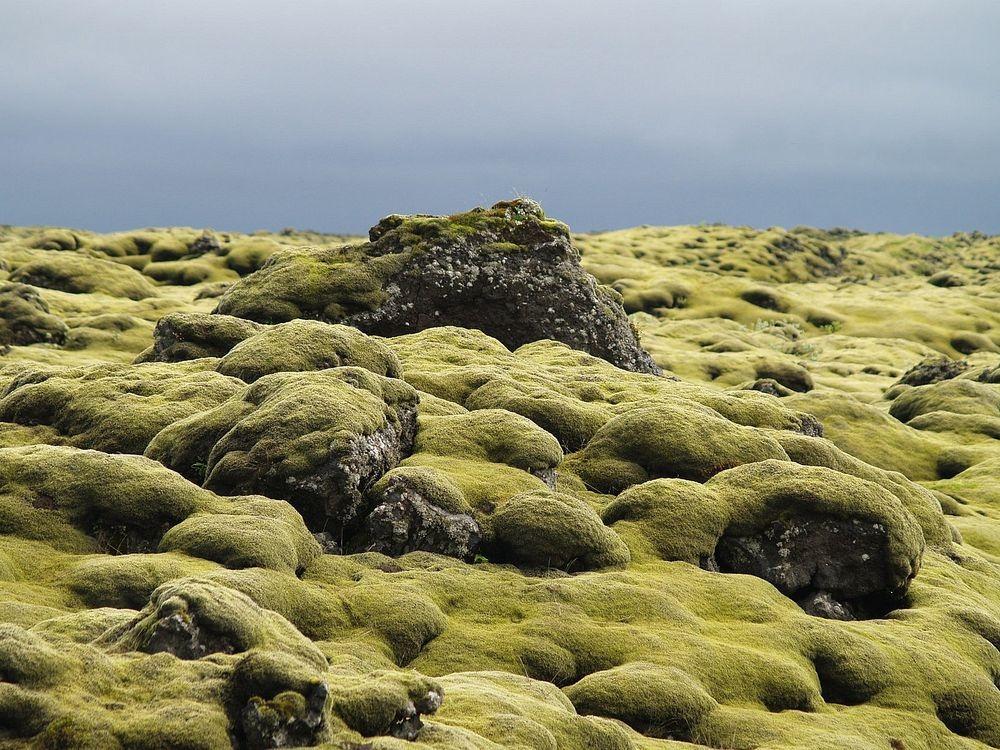 mossy-lava-fields-iceland-5