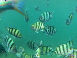 family trip pulau pari 140716 GoPro 44