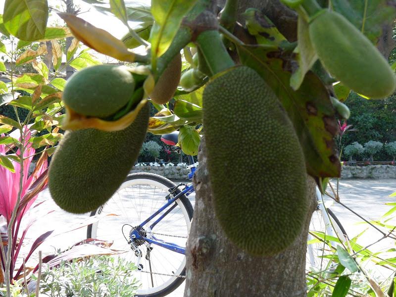 Fruit du   ??