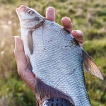 20140823_Fishing_Lysyn_013.jpg