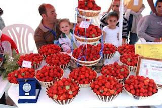 La fraise de Skikda, la reine indétrônable de tous les fruits