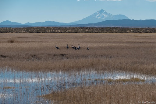 Lower Klamath and Tulelake NWR (20 of 27)