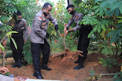 Polres Kepulauan Anambas kembali gelar panen raya ketahanan pangan di Bidang Pertanian yaitu jenis Ubi dan Sawi Hidroponik dalam rangka Polri Dukung Perekonomian Nasional