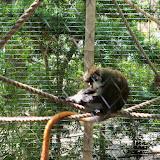 Houston Zoo - 116_8475.JPG