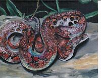 'Regenbogenboa', Öl auf Leinwand, 46x37, 2003