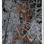 erdő, zúzmara 029.jpg