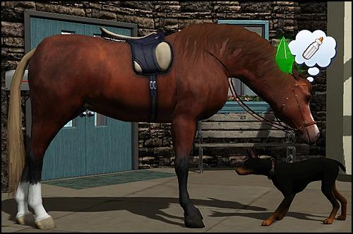 HorseSniff