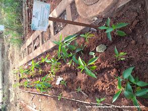 Photo: Organic Farming