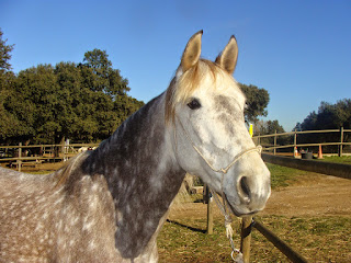 Cavalls de l'Hipica