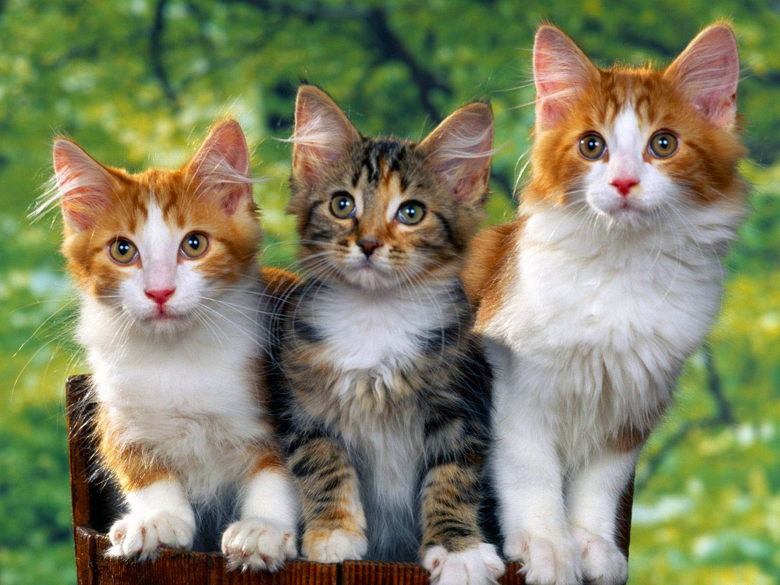 Cute Cat Wallpapers Full Hd Wallpaper Search