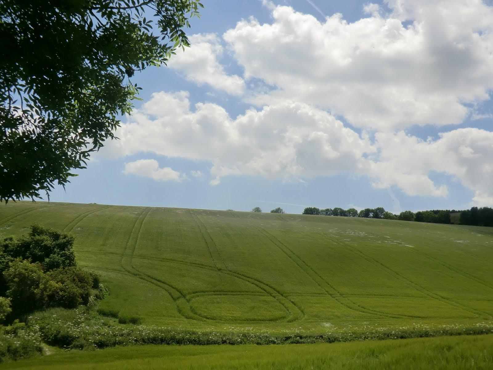 CIMG8824 Tracks through the crops, South Stoke Farm