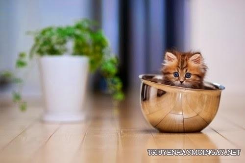Hình Nền Mèo Con Dễ Thương Cho Máy Tính