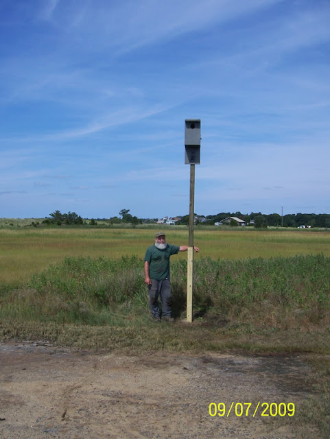 Kestrel-Bat Houses - pic3.jpg