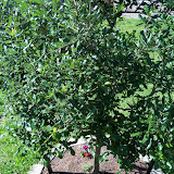 Gardening 2010 - 101_1323.JPG