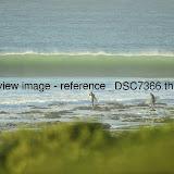 _DSC7366.thumb.jpg