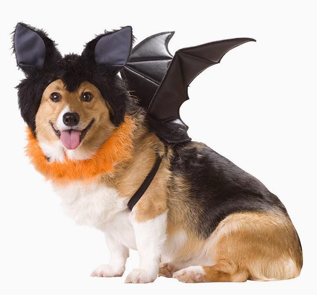 Bat Dog Costume Bat Halloween pet costume