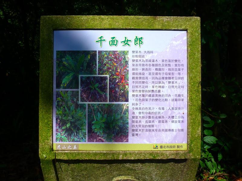 Taipei. Si Shou Shan, et la découverte des maisonnettes du professeur Y I   易教授 - P1340613.JPG