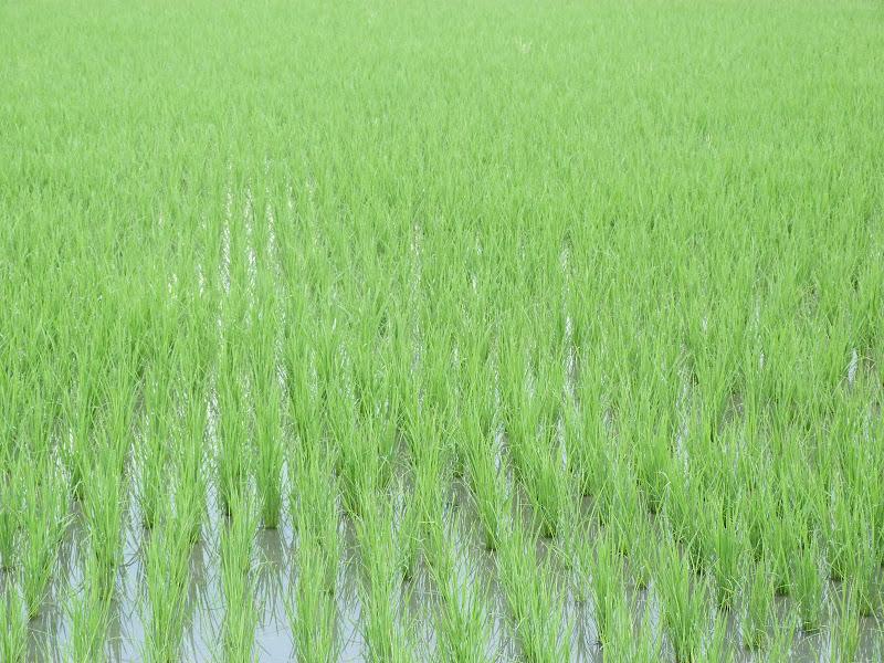 TAIWAN A cote de Luoding, Yilan county - P1130373.JPG