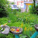 Мильчакова 10. птички свили гнезда в нашем дворе