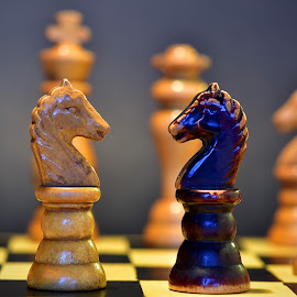Face To Face by Marco Bertamé - Artistic Objects Still Life ( wood, white, chess, game, black, knight,  )