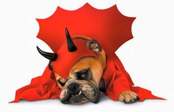 Devil Dog Costumes top 10 halloween pet costumes